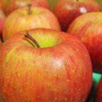 山元町のりんご