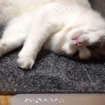 猫用ひんやり石
