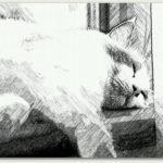 あっぺとっぺ画廊 猫展