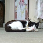 池間島の猫たち