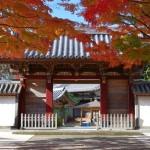 有秋の美 称念寺の紅葉