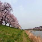 一目千本桜の満開全席 2010