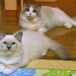 猫目と丸目