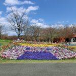みちのく公園のむすび丸花壇