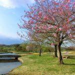 春爛漫!国営みちのく杜の湖畔公園
