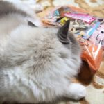 初売り福袋 ネコちゃんのおもちゃセット
