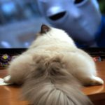 猫と暮らす際の鉄則
