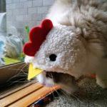 とっとこビー太郎 猫のほっかむり